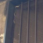 Paternò, lungo serpente in via Carducci. Allertati i pompieri, lo recuperano in 6