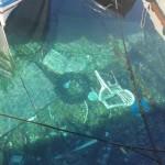 Viaggio tra i comfort dei pesci catanesi, dalle sedie di plastica alle maschere al petrolio