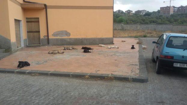 Cani randagi al cimitero di Paternò