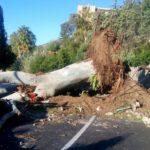 Taormina, il vento abbatte un albero secolare. Bloccato accesso al Centro