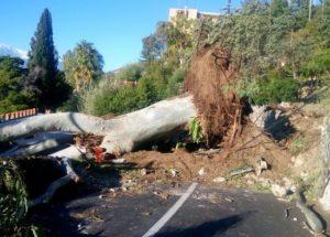 Maltempo: albero crollato a Taormina