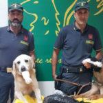 Roma-Catania con 7 kg marijuana. Arrestata