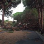 Sicilia. Maltempo a Palermo, caduto albero in strada