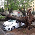 Alberi caduti sulla Palermo-Catania, due feriti