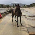 Palermo, danni in provincia per il maltempo: dispersi cavalli e cani a Vicari