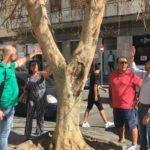 Paternò, nuova vita per l'albero di via degli Studi