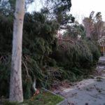 Paternò, Giunta dichiara stato di calamità naturale